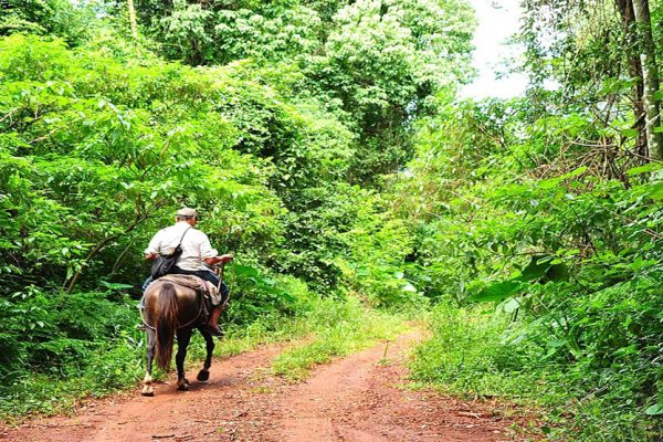 Selva Misionera